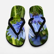 blue summer cornflower Flip Flops