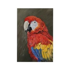 Scarlet Macaw Rectangle Magnet