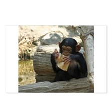 Chimpanzee_2015_0101 Postcards (Package of 8)
