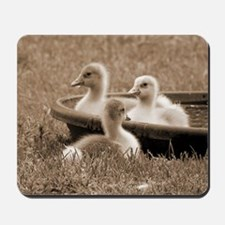 Three little goslings wildlife in the mo Mousepad