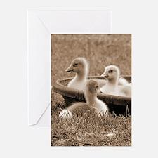 Three little goslings wildlife in t Greeting Cards