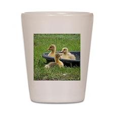 Three little goslings wildlife in the m Shot Glass
