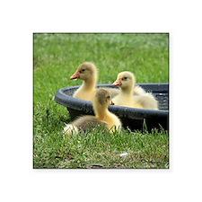 "Three little goslings wildl Square Sticker 3"" x 3"""