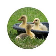"""Three little goslings wildlife in the  3.5"""" Button"""