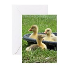 Three little goslings wildlife in t Greeting Cards