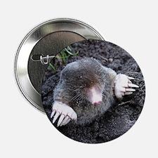 """Adorable Mole in Dirt 2.25"""" Button"""