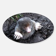 Adorable Mole in Dirt Decal