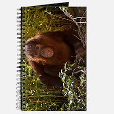 Orangutan Child 7358 Journal