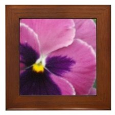 Purple Throated Pansy Framed Tile