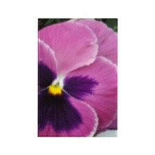 Purple Throated Pansy Rectangle Magnet