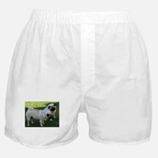 Two fawn Pugs Boxer Shorts