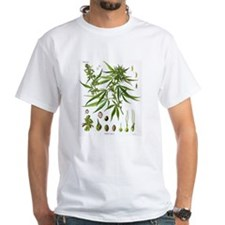 Cannabis Sativa Koehler Drawing T-Shirt