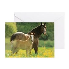 Welsh Cob Mare + Foal Greeting Card