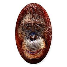 Orangutans Decal