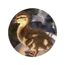 "Ducks 3.5"" Button"