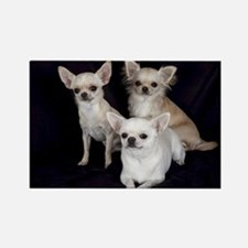 Adorable Chihuahuas Magnets