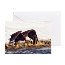 Soaring On The Wings Of An Eagle Greeting Cards