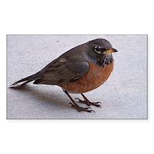 Robin Decal