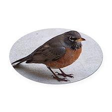 robin Oval Car Magnet