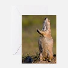prairie dog alert Greeting Card