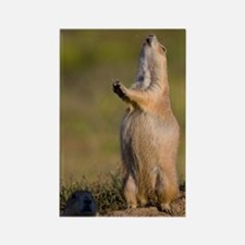 prairie dog alert Rectangle Magnet