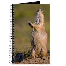 prairie dog alert Journal