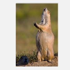 prairie dog alert Postcards (Package of 8)