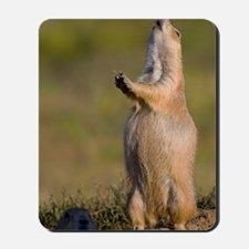prairie dog alert Mousepad