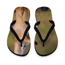 prairie dog alert Flip Flops