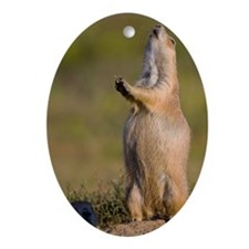 prairie dog alert Oval Ornament