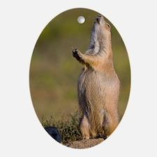 prairie dog alert Oval Ornament