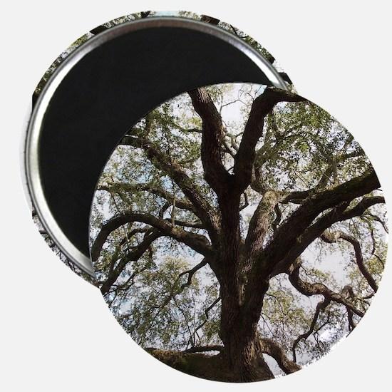 Savannah Oak Magnets
