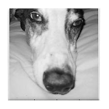 Tile Coaster - Nosey GreyHound