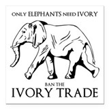 Ban ivory Car Magnets