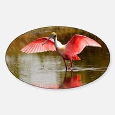 Spoonbill Portrait Decal