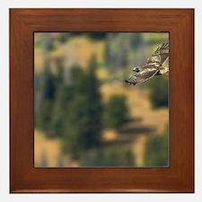 Red-tailed Hawk Framed Tile