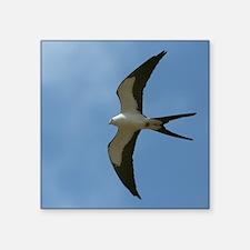 "Swallow-tailed Kite Square Sticker 3"" x 3"""