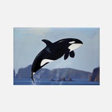 Orca Breaching Magnets