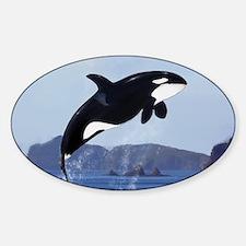 Orca Breaching Decal
