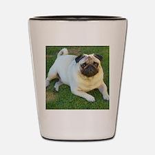 Pug lying down Shot Glass
