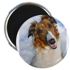 """Funny Colorful 2.25"""" Magnet (10 pack)"""