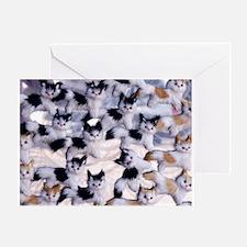 Unique Lol cats Greeting Card