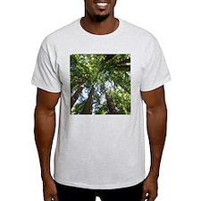 up into treetops, Muir Woods, California T-Shirt