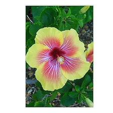 Hawaiian Hibiscus Postcards (Package of 8)