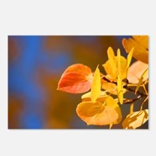 Aspen Colors Postcards (Package of 8)