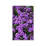 Purple 3x5 Rugs