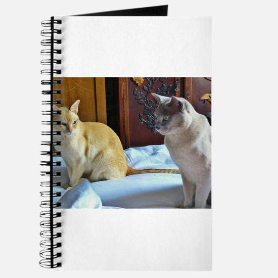 Red and Lilac Burmese Cats Journal