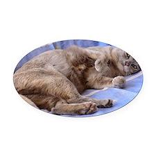Blue Tortoiseshell Burmese Cat Oval Car Magnet