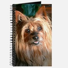 Australian Silky Terrier headstudy Journal