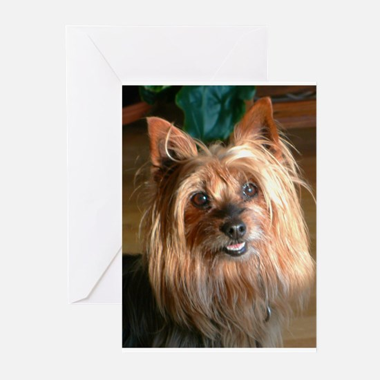 Australian Silky Terrier headstudy Greeting Cards